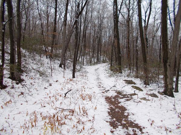 Fire Tower Ridge Trail