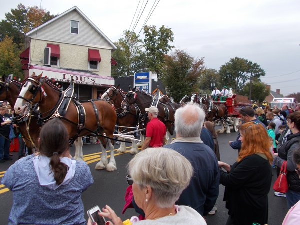 Budweiser Clydesdales in Hillsdale, NJ